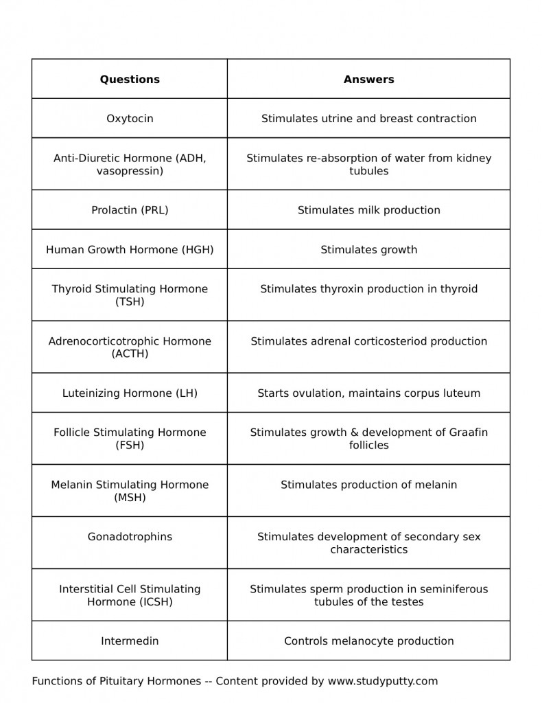 Endocrine System Pituitary Hormones Study Sheet